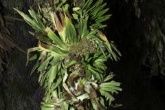 Erbe Medicinali e Frutta nel Mercato di Chiclayo Perù 2012