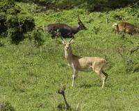 Menelik nel Parco del Gobi / Foto n. 0103