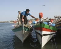 Barche di pescatori al porto di Al Hodeidah Yemen / Foto n. 0013