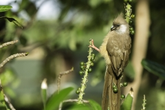 Kenya Ambiente Fauna & Flora 2013