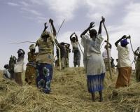 Cerimonia battitura del Riso lungo il Fiume Niger / Foto n. 0288