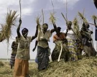 Cerimonia battitura del Riso lungo il Fiume Niger / Foto n. 0370