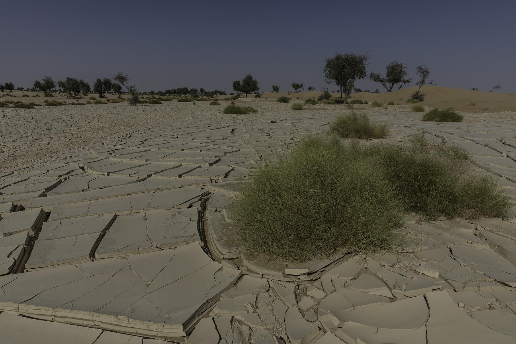 Rub Al Kali Foto n. Y3A1599