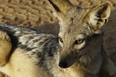 Samburu National Reserve Kenya 2013